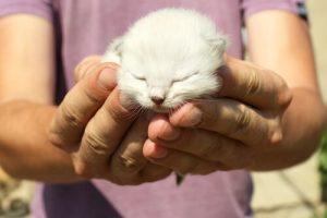 Deine Katze glücklich zu machen - kleines Kätzchen