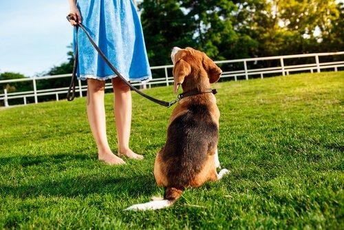 """Hundebefehle: Dem Hund """"Komm"""" beibringen"""