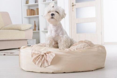 Die Dinge die jeder Hund tun sollte - Hundebett