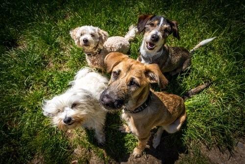 Die Dinge die jeder Hund tun sollte. Vermenschliche ihn nicht!