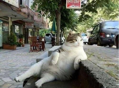 Die Stadt der Katzen - Katze posiert