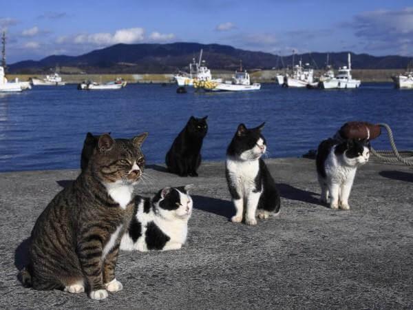 Die Stadt der Katzen - Katzen am Hafen