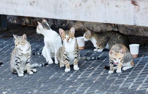 Istanbul, die Stadt der Katzen