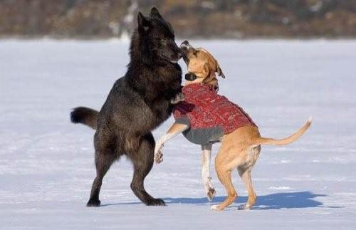 Die enge Freundschaft zwischen einem Wolf und einem Hund