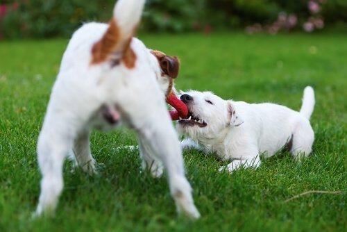 5 Dinge, die deinen Hund glücklich machen