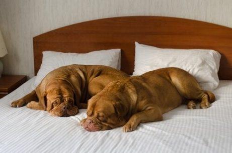 Ein Hotel für deinen Hund