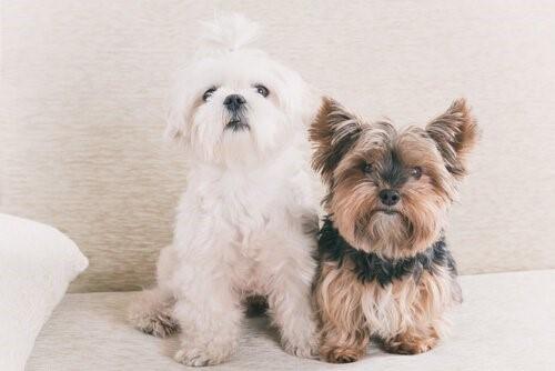 Realität oder Mythos: ein Hundejahr entspricht sieben Menschenjahren