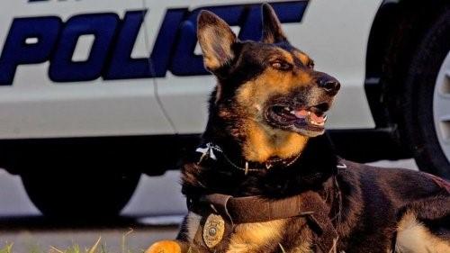 Ein Polizeihund geht in Ruhestand