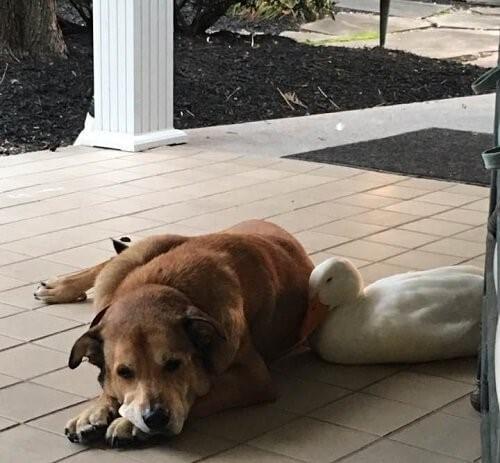 Ein depressiver Hund ist wieder glücklich - George und Donald kuscheln