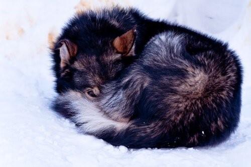 Eine Hündin wurde erfrohren auf einem Berggipfel gefunden - Bonnie