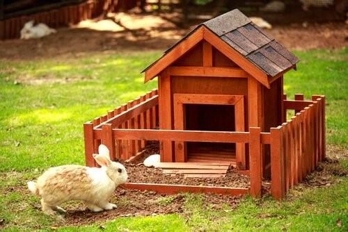 Einen Hasen als Haustier halten - Hase im Garten
