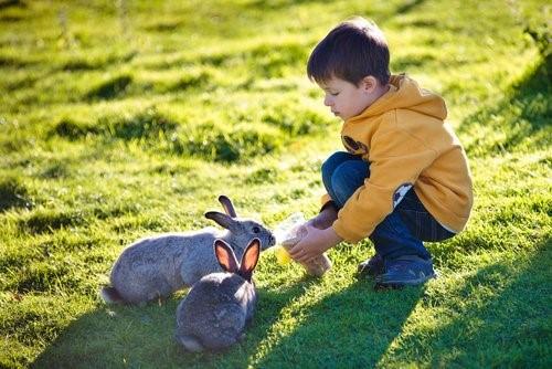 Einen Hasen als Haustier halten - Kind füttert Hasen