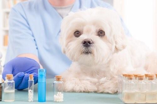 5 natürliche Öle, die im Erste Hilfe Kasten deines Hundes nicht fehlen dürfen