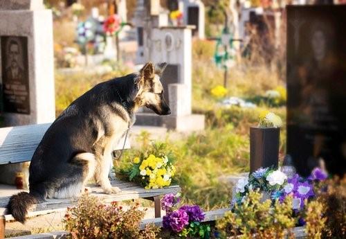 Es wird erlaubt Besitzer und Haustiere zusammen zu bestatten - Hund am Grab
