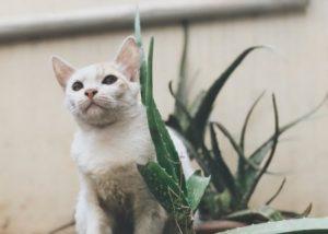 Hat Aloe vera Vorteile für Hunde oder Katzen