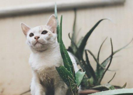 Hat Aloe vera Vorteile für Haustiere?