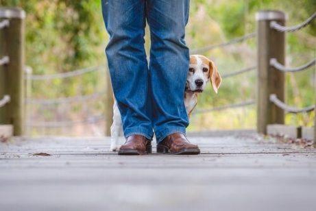 Hund mag andere Hunde und Menschen nicht - ängstlicher Hund