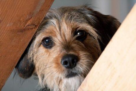 Hund mag andere Hunde und Menschen nicht - neugieriger Hund