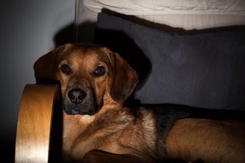 Auch Hunde fernsehen - Hund auf Sofa