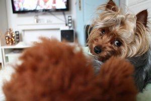 Auch Hunde fernsehen - Hund im Bett