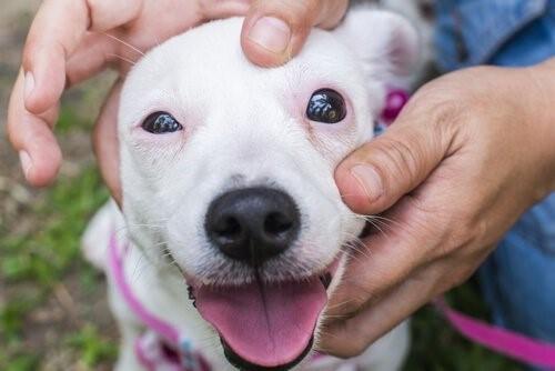 Hunde mit Geräusch-Phobie, wie kann man ihnen helfen?