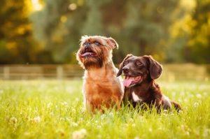 Instinkte deines Hundes - Hunde auf Wiese