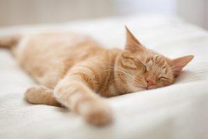 Können Haustiere träumen - schlafende Katze