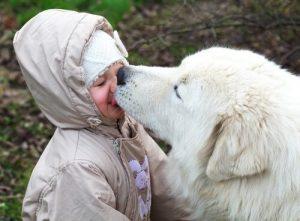 Können wir zulassen, dass unser Hund unser Gesicht ableckt - Hund leckt Gesicht von kind ab