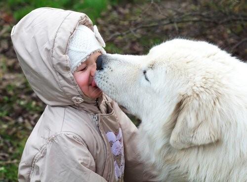 Können wir zulassen, dass unser Hund unser Gesicht ableckt?