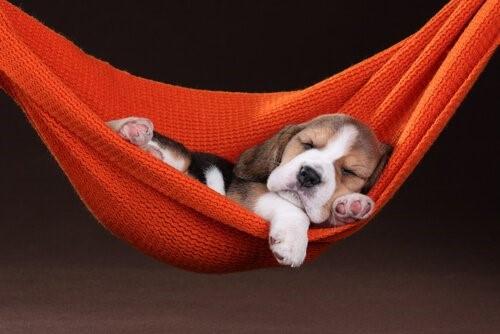 Können Haustiere träumen?