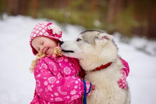 Können wir zulassen, dass unser Hund unser Gesicht ableckt - Hund mit mädchen