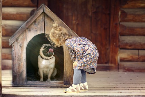 Kann man einen Hund unbewusst misshandeln?