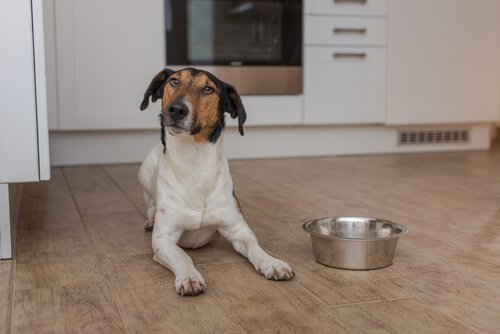 Hund will Futter