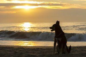 Nach dem Tod deines Haustieres - Hund am Strand
