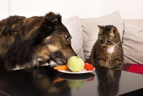 Welches Obst und Gemüse ist gut für dein Haustier