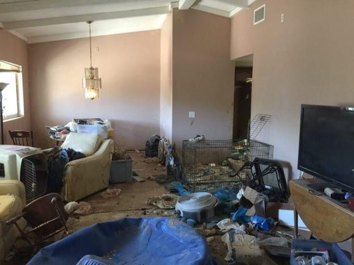 Pitbulls wurden aus sehr schlechten Bedingungen gerettet - Haus