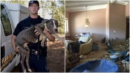 Pitbulls wurden aus sehr schlechten Bedingungen gerettet