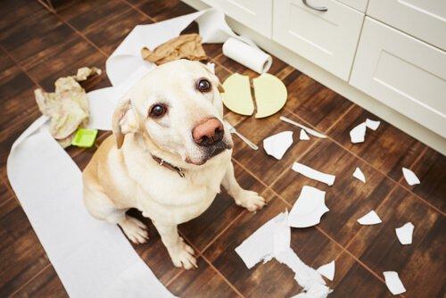 Problemverhalten beim Hund vermeiden - 5 Tipps