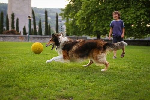 Sätze, die Hundeliebhabern nie gesagt werden sollten - Kind mit Hund