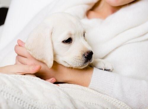 Sätze, die Hundeliebhabern nie gesagt werden sollten - Hund auf dem Schoss