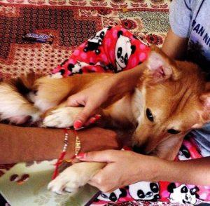 Sie musste einen Heiratsantrag ablehnen um ihren Hund nicht zu verlieren - Lucy