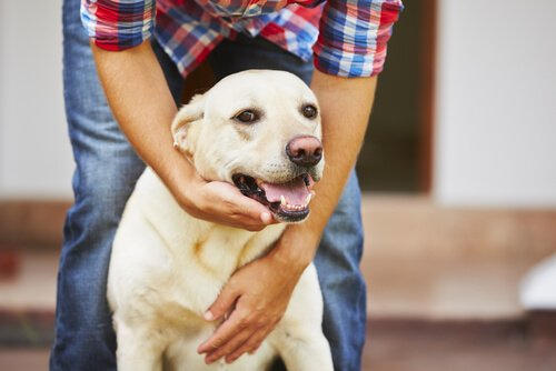 einem Straßenhund ein neues Heim geben