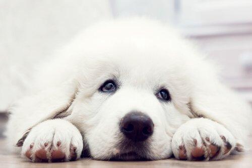 """""""Take me home"""": Kurzfilm über die Adoption eines Hundes"""