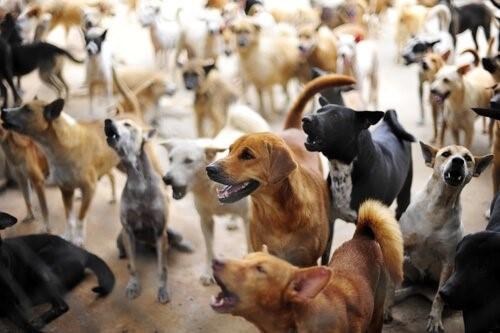 Tekis, der Mann der 200 verlassene Hunde in Griechenland gerettet hat