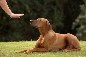 Tipps damit dein Hund zu dir kommt, wenn du ihn rufst - Hundetraining