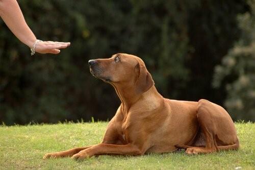 Tipps damit dein Hund zu dir kommt, wenn du ihn rufst