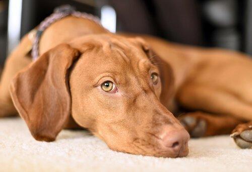 5 Tipps gegen Angstverhalten bei Hunden