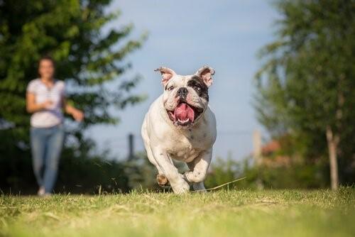 Verbot von Hunderennen - Hund rennt