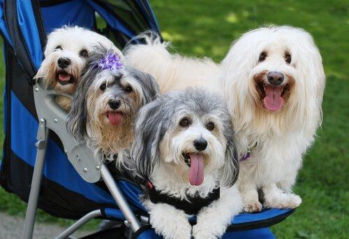 Vermenschlichung des Hundes: 3 Gefahren