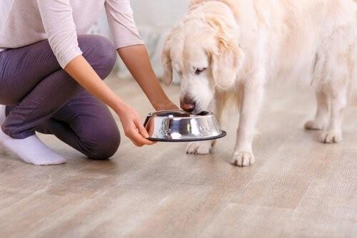 Von deinem Hund lernen - Hund beim Fressen